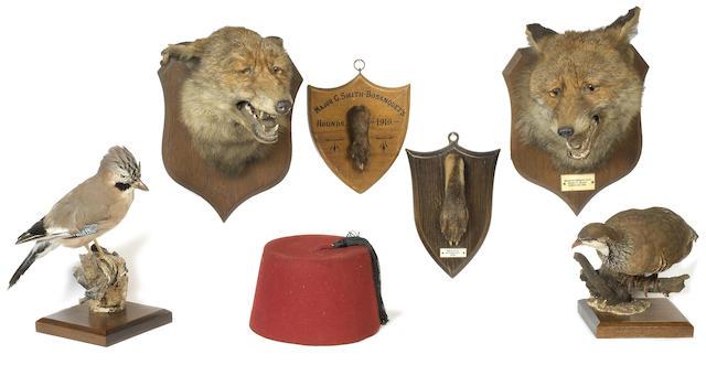 A collection of taxidermy mounted hunting trophies and birds