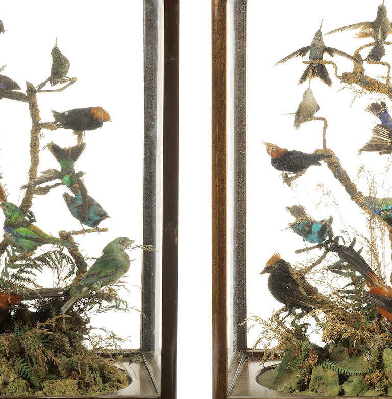 A pair of late 19th/early 20th century taxidermy cased displays of hummingbirds and other exotic small birds