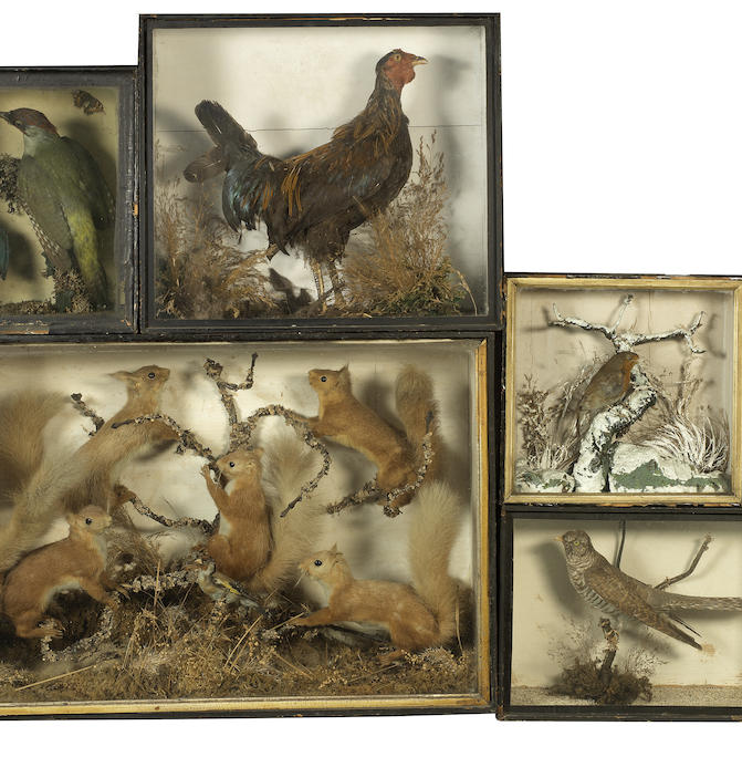 A collection of cased taxidermy birds and animals