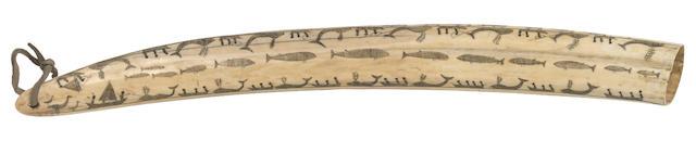 An Eskimo scrimshaw walrus tusk