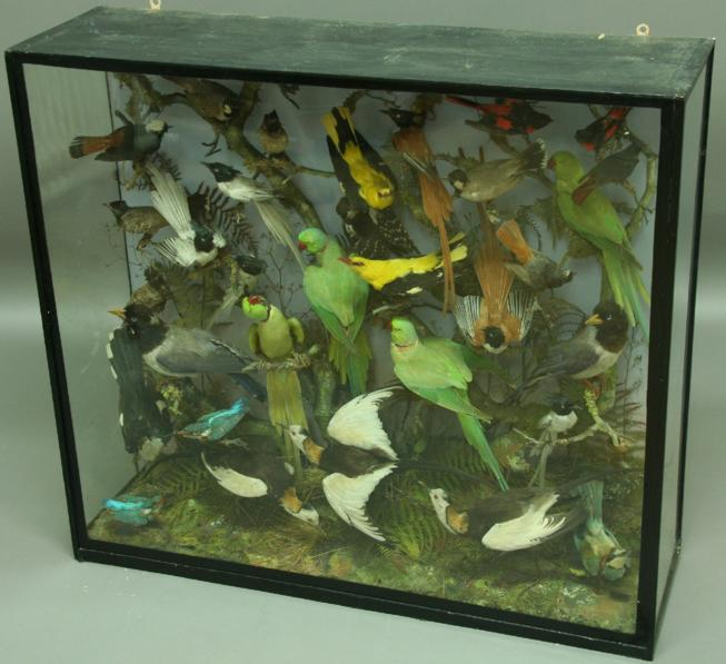 TAXIDERMY: A LARGE GLAZED DISPLAY CASE OF EXOTIC BIRDS