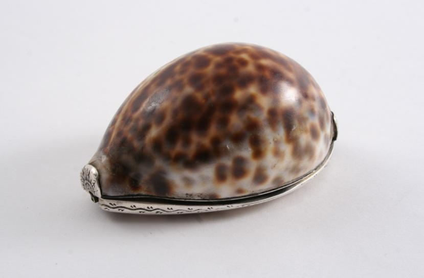 AN EARLY 19TH CENTURY MOUNTED COWRIE SHELL SNUFF BOX