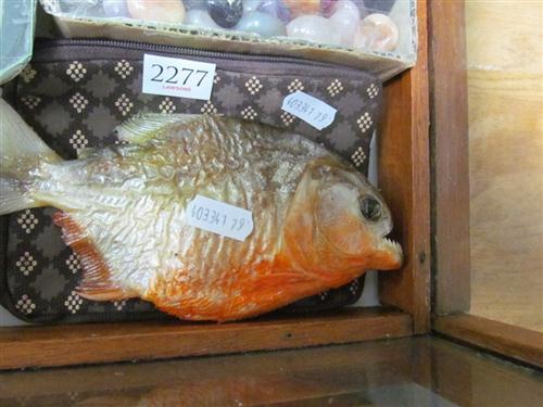 Piranha + Pouch