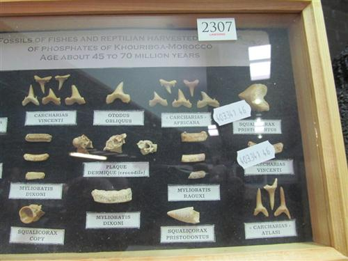 African Fossil Cabinet