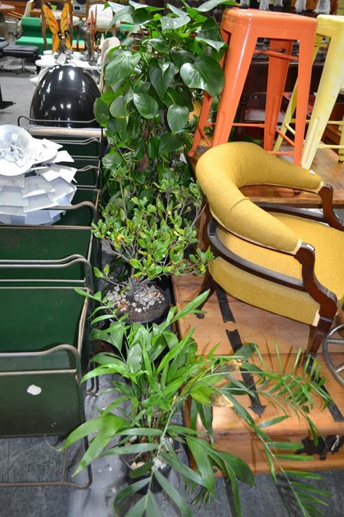 4 Assorted Plants