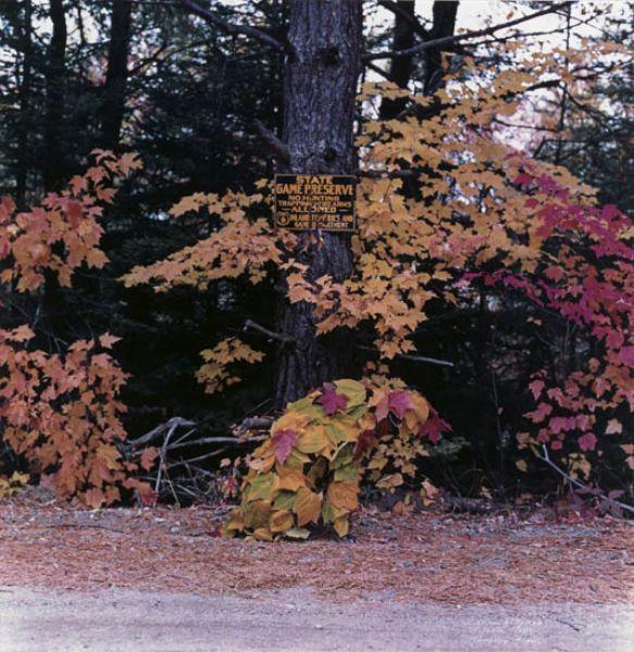 Rangeley, Maine, October 1981