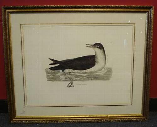 Ornithological studies