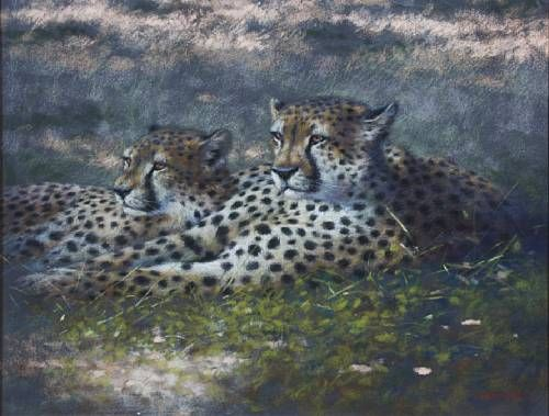 'The Brothers (Cheetahs)'