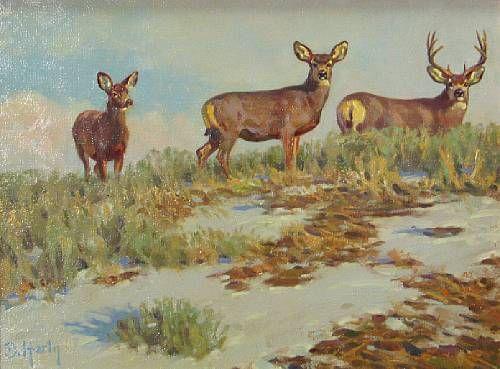 Crest top mule deer