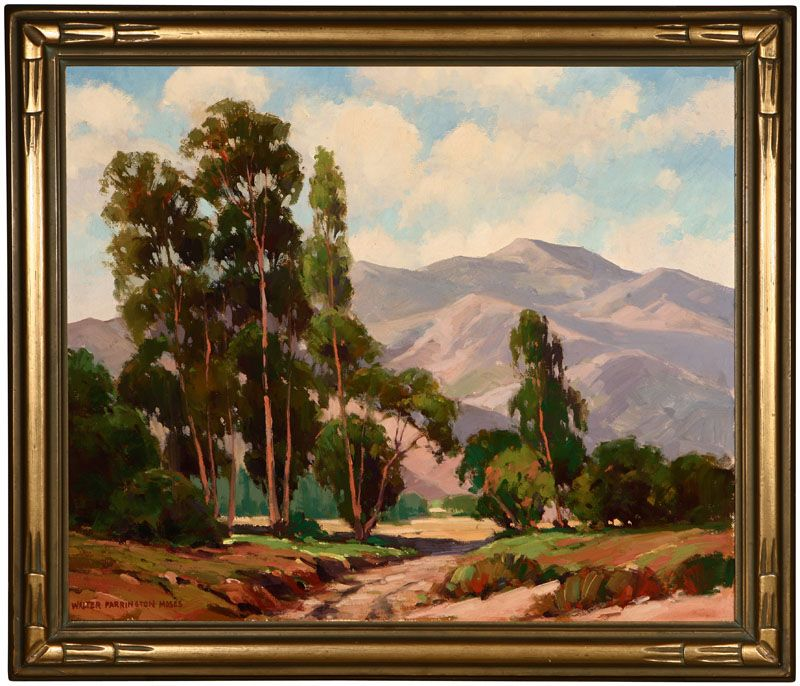 Eucalyptus trees in a California foothills landscape