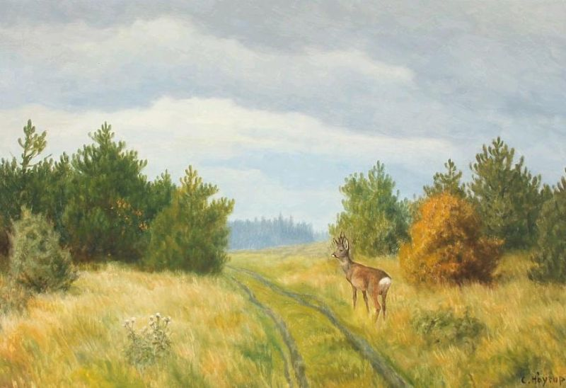 Forest scenery with deer