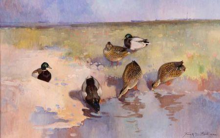 Mallard Ducks by Waters Edge