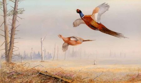 Pheasant in Flight over Woodland