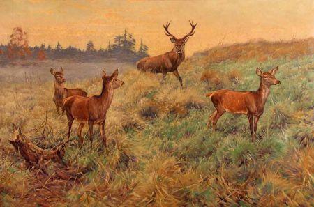 Red Deer in Extensive Wooded Landscape