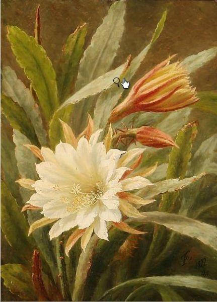 A white cactus flower