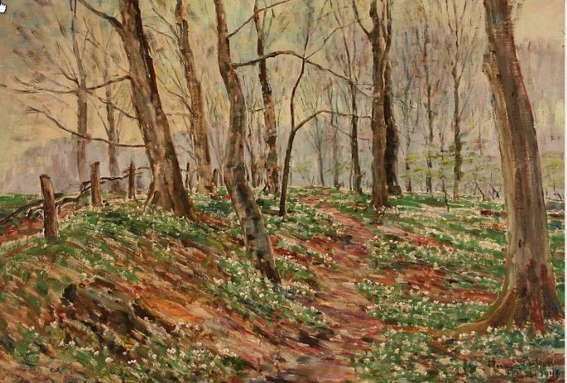 Forest scene with blooming anemones at spring time.