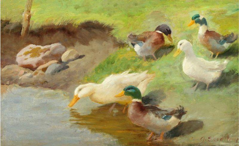 Ducks by a waterhole.