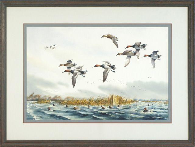Ducks in the low lands