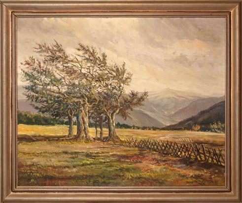 Wetterbuchen auf dem Schauinsland, im Hintergrund der Feldberg