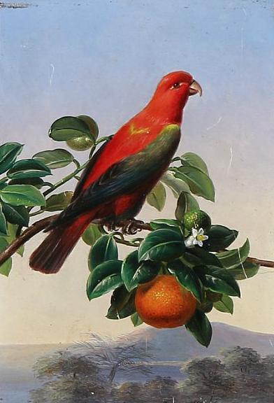 A parakeet on an orange branch